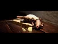 עכבר חזק