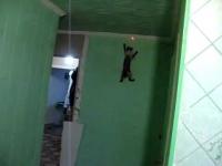 החתול שרוצה להיות ספיידרמן
