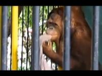 אם קוף רוצה ללבוש את החולצה שלך, תן לו