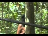 צפו: התיעוד הראשון של שבט הקאוואהיבה באמזונס.