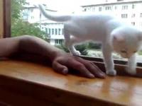 ברוסיה החבר הטוב ביותר של אדם הוא החתול!