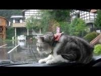 צפו: חתול שמנסה לתפוס את המגב (וישר) בגשם