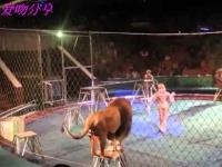 צפו: אריה תוקף את הפעלולנים בזמן מופע בקרקס לעיניי כולם