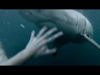 צפו: מפגש עם כריש וניצל בנס