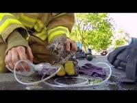 צפו: לוחמי האש מצליחים להציל גור חתולים בזמן שריפה