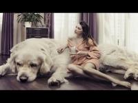 10 הכלבים הכי גדולים שיש