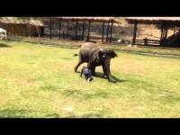מדהים - הבחור הזה הרביץ לבעלים של הפיל מה שהפיל עושה לא ראיתם דבר כזה