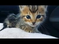 הם מצאו גורת חתולים חצי מתה על הכביש - אבל העקשנות שלהם הצילה אותה