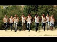 סרט הטבע של נאור ציון - דה יזראלי ערסוואת