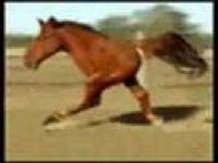 סוס ריצה מפגר