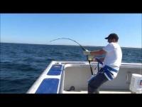 """הצליח לדוג דג במשקל 450 ק""""ג עם חכה"""