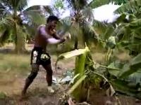 לוחם אגרוף תאילנדי מוריד עץ בבעיטות