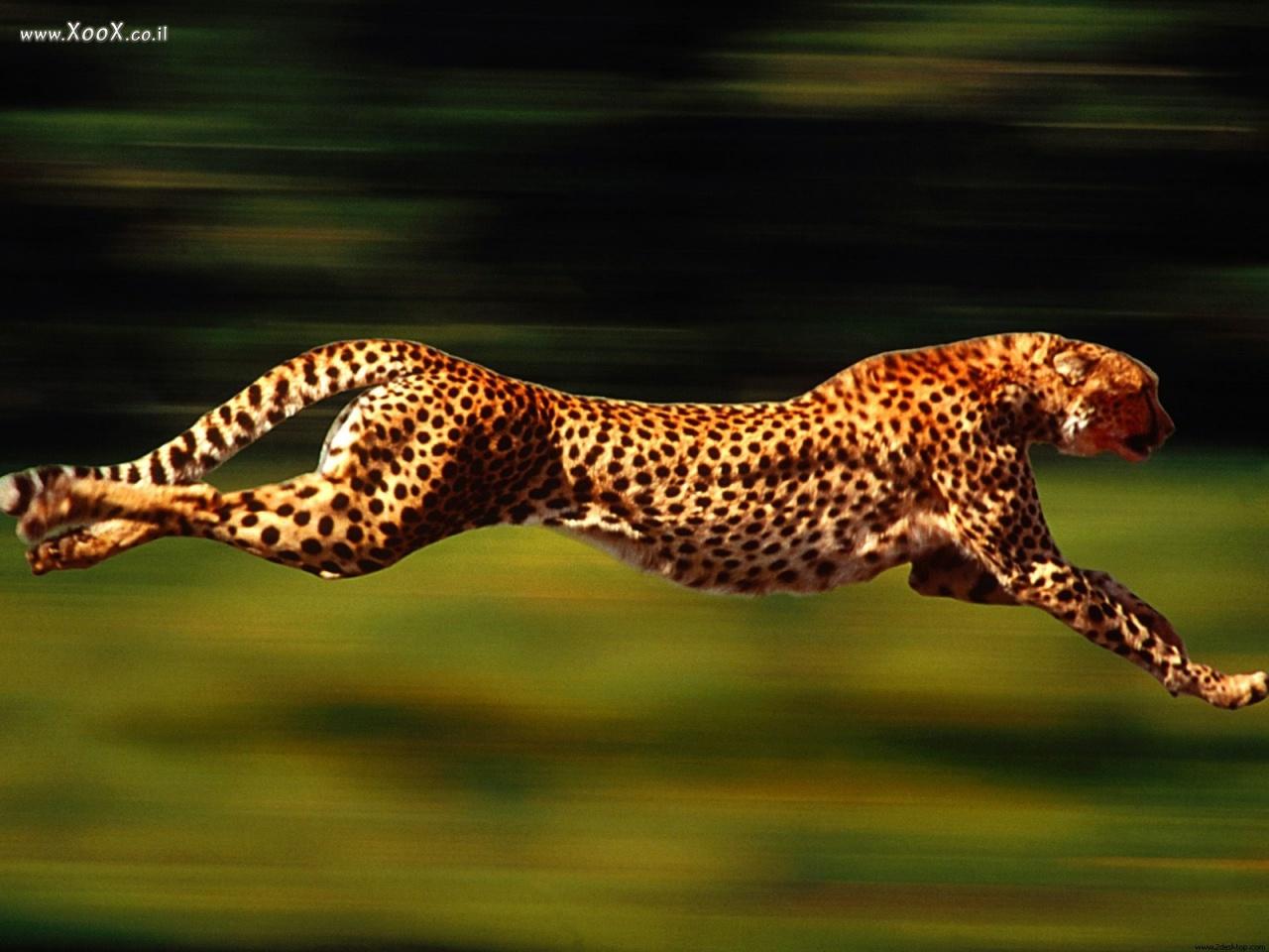 מהי החיה המהירה ביותר עלי אדמות ?