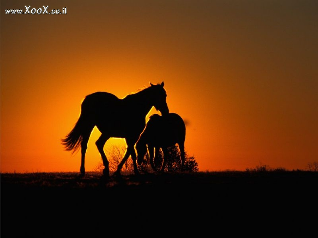 love horses pasture wallpaper - photo #20