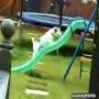 כלב נחוש לטפס על המגלשה