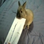 ארנב פותח מכתב