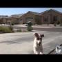 צפו: הכלב שיעזור לך בהכל!
