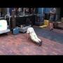 צפו: בן 83 רוקד ריקודי סבתא במופע רוקנרול