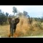 צפו: פיל עצבני תוקף ג'יפ עם תיירים בספארי ומצליח להפוך אותו