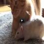 צפו: חתול ועכבר החברים הכי טובים