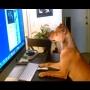 צפו: כלבים שמתנהגים כמו בני אדם