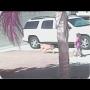 צפו: חתול הציל ילד מתקיפת כלב
