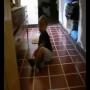 יצור מוזר נתפס במצלמה , בזמן שאמא מצלמת את הילד שלה