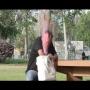 צפו: העונש לגנבי התיקים