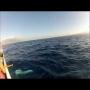 לוויתן מתנגש בסירה