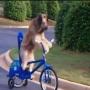 כלב רוכב על אופניים
