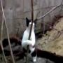חתולה סקסית חשה את עצמה במופע סטריפטיז