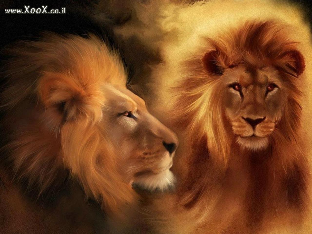 אריה - רקעים למחשב, תמונות, שומר מסך, שומרי מסך של אריה
