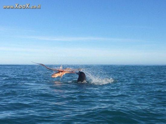 קרב עד מוות בן אריה ים ותמנון