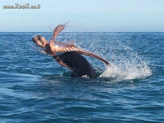 קרב בן אריה ים ותמנון
