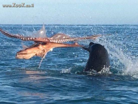 אריה ים ותמנון