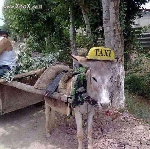 תוצאת תמונה עבור תמונות מצחיקות של מונית