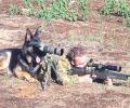 כלב צבאי