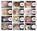 סמייל חתולים