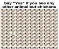 מצאתם משהו אחר חוץ מתרנגול?